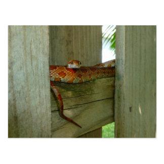 röd råttaorm i stakethuvud upp vykort