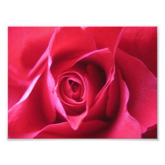 Röd ros fototryck