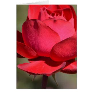 Röd ros hälsningskort