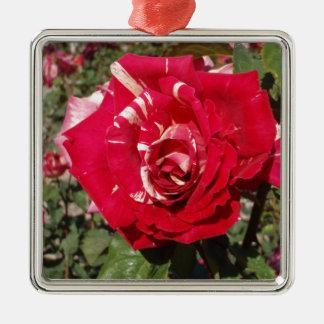 Röd ros med ett stänk av kräm julgransprydnad metall