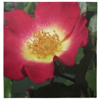 Röd rosblomma med gula stamens tygservett