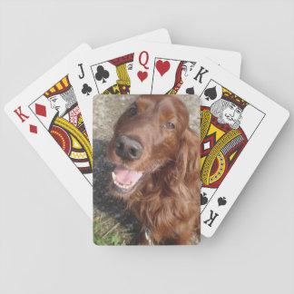 Röd Setter som leker kort Casinokort