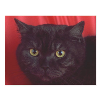 RÖD svart katt - Vykort