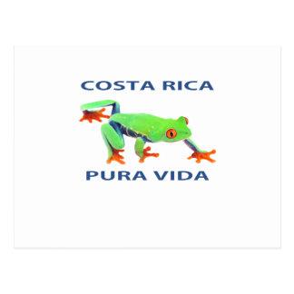 Röd synad trädgroda Costa Rica Pura Vida Vykort