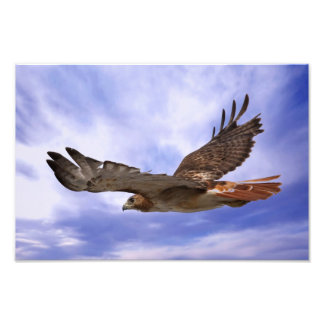 Röd Tailed hök Konstfoto