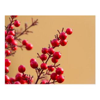 röda bär i trädgården vykort