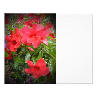 Röda blommor fototryck