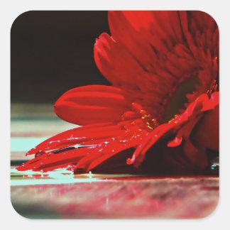 Röda daisyGerberablommor Fyrkantigt Klistermärke