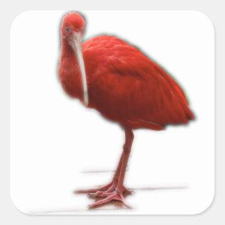 Röda Ibis ger denna till fågelälskare i ditt liv Fyrkantigt Klistermärke