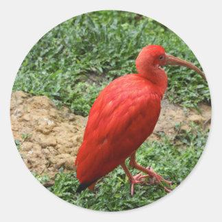 Röda Ibis Runt Klistermärke