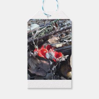 Röda koppar och löv pack av presentetiketter