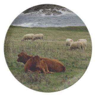Röda kor för södra Devon Ruby som vilar med får Tallrik