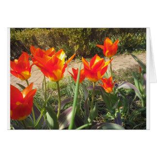 Röda och gula tulpan hälsningskort