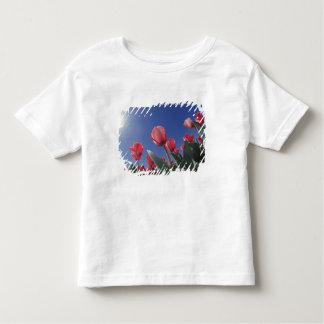 Röda tulpan från mycket låg vinkel, Cincinnati, T Shirts