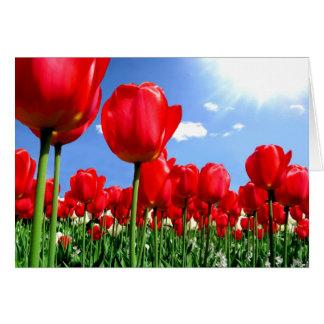 Röda tulpan i springtime hälsningskort