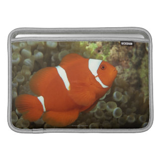 Rödbruna clownfish med havsanemonen MacBook sleeve