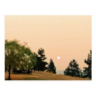 Röka på solen vykort