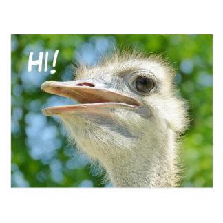 Rolig afrikansk Ostrich - hög vykort