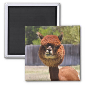Rolig Alpacamagnet Magnet