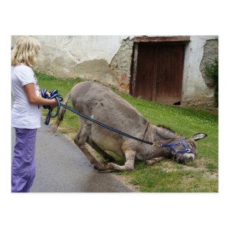 Rolig avkopplad åsna vykort