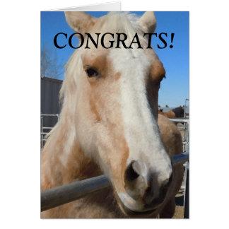 Rolig häst för professionellstudentgrattis hälsningskort