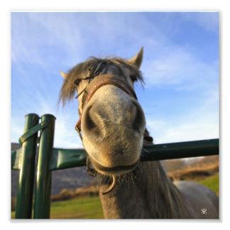 Rolig häst fototryck