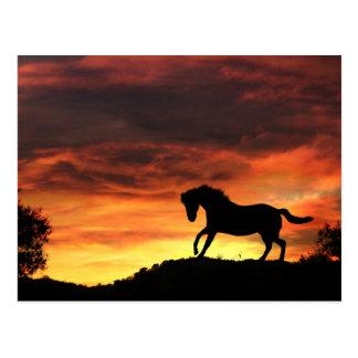 Rolig häst i solnedgångvykortet vykort