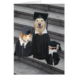 Rolig hund studenten hälsningskort