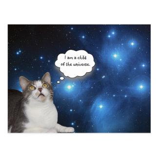 Rolig kattdagdrömmare vykort