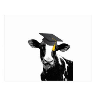 Rolig ko för grattisstudenten i lock vykort