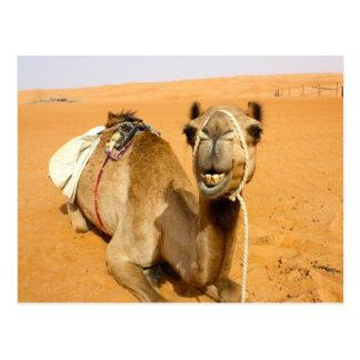Rolig le kamel vykort