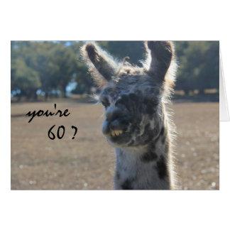 Rolig Llamafödelsedag, 60th, över backen Hälsningskort