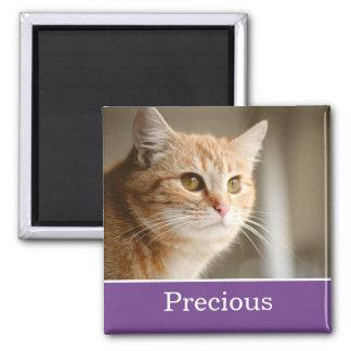 Rolig magnet för foto för lilapersonlighusdjur