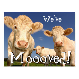 Rolig ny adress vi har flyttat för kor vykort