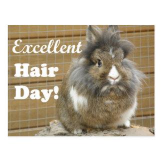 """Rolig """"utmärkt hårdag"""" för Rabbit. Vykort"""