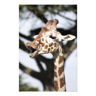 Rolig vänd mot reticulated giraff, San Francisco Fototryck