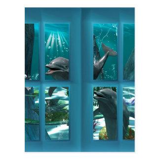 Roliga delfiner vykort
