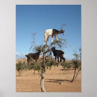 Roliga getter i ett träd poster