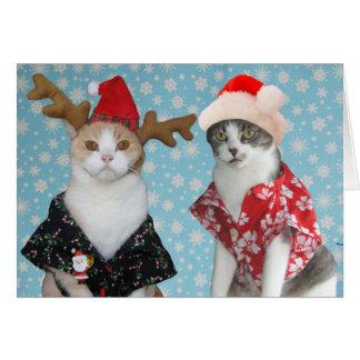 Roliga julkatter för anpassade hälsningskort