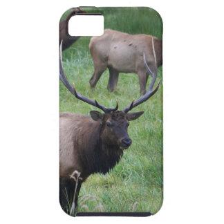 Roosevelt älg i Oregon Tough iPhone 5 Fodral