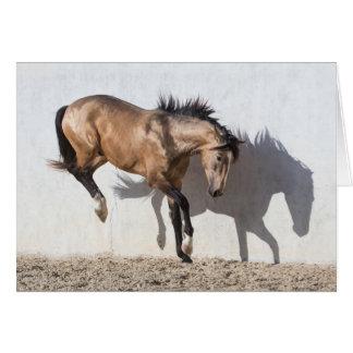 Röra hästhälsningkort - besegra hälsningskort