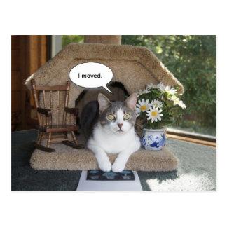 Rört nytt adress för rolig katt vykort