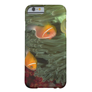 Rosa Anemonefish i Magnificant havsanemon Barely There iPhone 6 Fodral