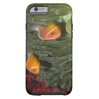 Rosa Anemonefish i Magnificant havsanemon Tough iPhone 6 Case