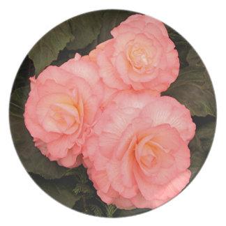 Rosa begoniablommor tallrik