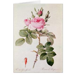 Rosa Bifera Officinalis, från 'Les ro Hälsningskort