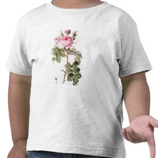 Rosa Bifera Officinalis, från 'Les ro Tee Shirt