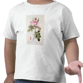 Rosa Bifera Officinalis, från 'Les ro Tee Shirts