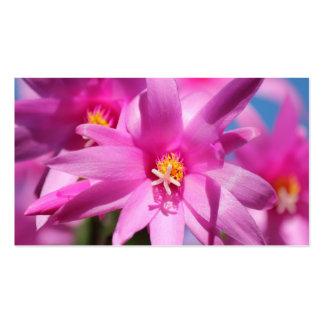 Rosa blommar för blomma för julkaktusSchlumbergera Set Av Standard Visitkort
