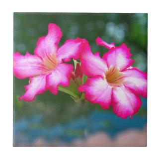 Rosa blommar liten kakelplatta